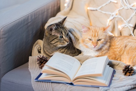 two cats lying on sofa with book at home