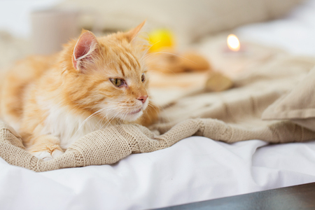 red tabby cat lying on blanket at home in winter Archivio Fotografico - 108722102
