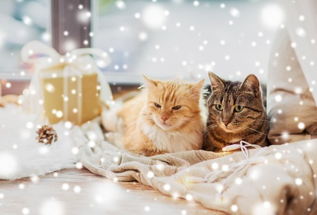 cats lying on windowsill with blanket at christmas Фото со стока