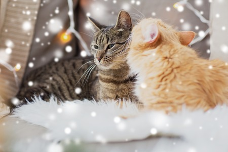 two cats lying on sheepskin in winter at home