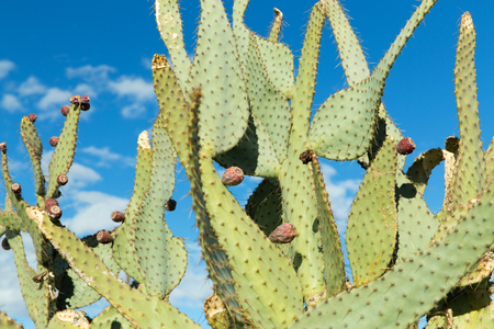 close up of cactus growing outdoors over blue sky