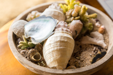 close up of seashells and corals in bowl on table