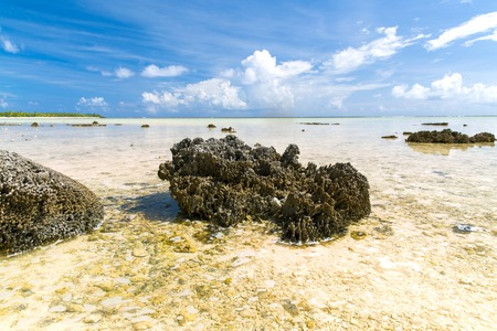 hard stony coral on beach in french polynesia 版權商用圖片