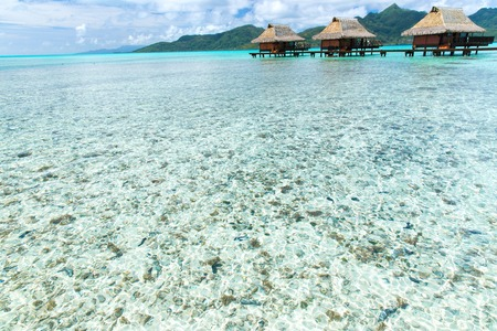 bungalows on tropical resort of french polynesia