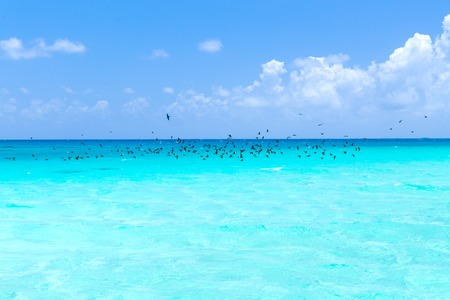 birds flying over ocean in french polynesia