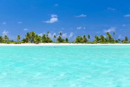 tropical beach with palm trees in french polynesia 写真素材