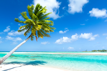 tropical beach with palm tree in french polynesia Imagens