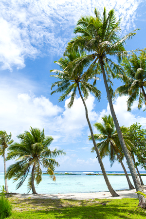 tropical beach with palm trees in french polynesia Stock Photo