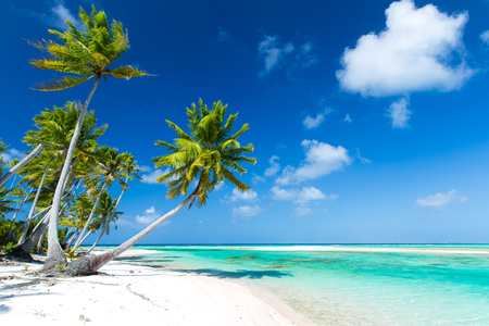 tropical beach with palm trees in french polynesia Stock fotó