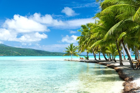 palm trees on tropical beach in french polynesia Stock Photo