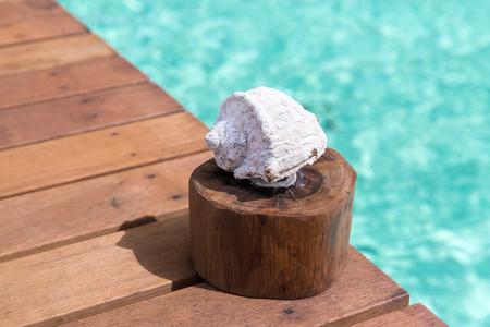 seashell on wooden pier in sea water