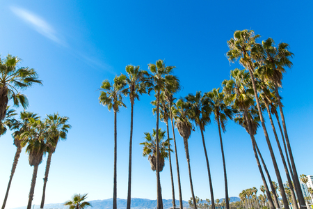 palm trees at venice beach, california