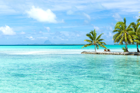 palm trees on tropical beach in french polynesia Imagens