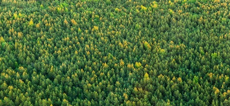 drone photography concept - aerial view of wild spruce-fir forest in summer Stock Photo