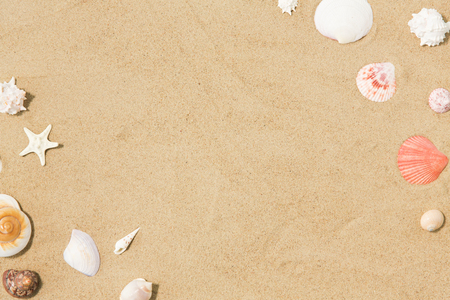 seashells on beach sand