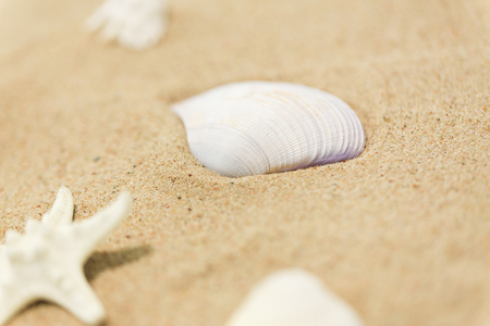 vacation and summer holidays concept - seashells on beach sand 版權商用圖片