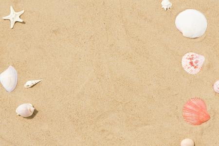 muszle na piasku na plaży