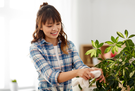 happy woman cleaning houseplant leaves at home