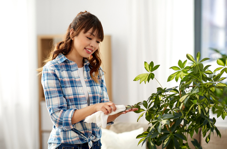 Happy woman cleaning houseplant leaves at home Zdjęcie Seryjne - 123602808
