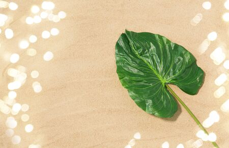 green tropical leaf on beach sand