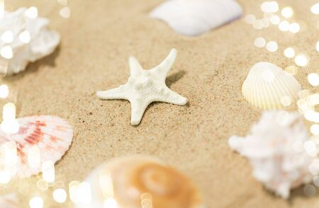 Starfish and seashells on beach sand