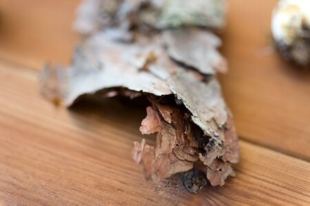 Close up of pine tree bark on wooden background 版權商用圖片