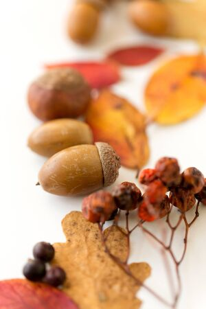 Close up of acorns, rowanberries and autumn leaves 写真素材