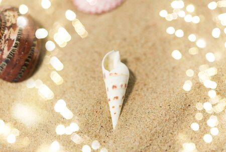 Seashells on beach sand 版權商用圖片