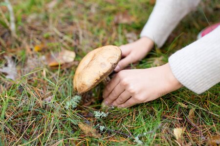 hands picking mushroom in autumn forest