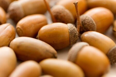 close up of acorns on white background