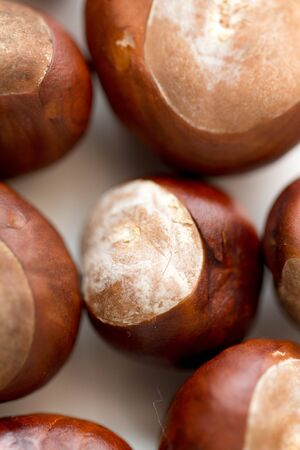 close up of horse chestnuts on white background Stock Photo