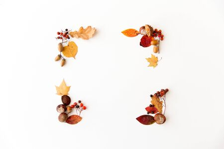 nature, season and botany concept - frame of different dry fallen autumn leaves, chestnuts, acorns and berries on white background