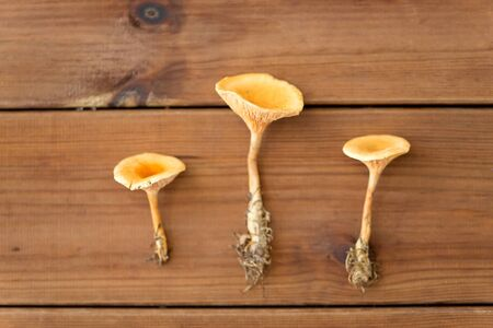 chanterelles on wooden background Stock Photo