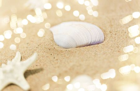 seashells on beach sand