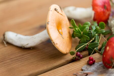 Russule mushrooms and cowberry on wood Stock Photo