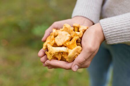 Close up of woman hands with mushrooms in forest