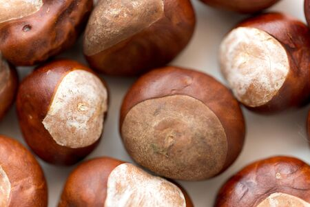 Close up of horse chestnuts on white background
