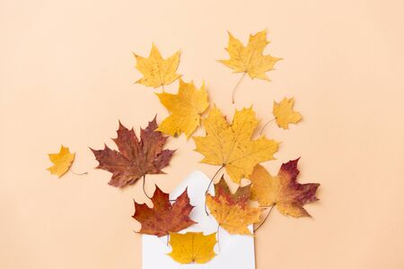 Autumn maple leaves with envelope on beige