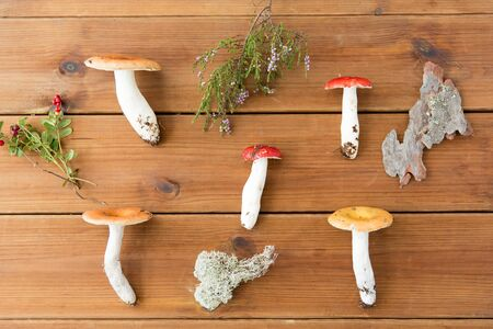 Russule mushrooms on wooden background