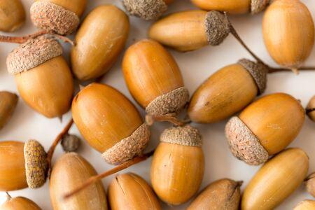 Close up of acorns on white background Stockfoto