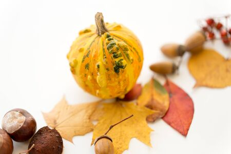 nature, season and botany concept - close up of pumpkin, autumn leaves, chestnuts and acorns on white background