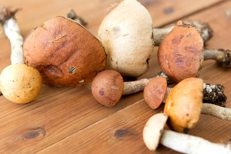 brown cap boletus mushrooms on wooden background