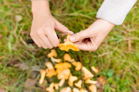 hands cleaning mushrooms by knife in forest