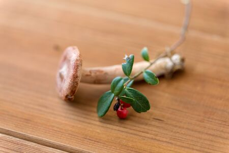 cowberry and lactarius rufus mushroom on wood