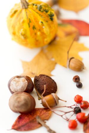 chestnuts, acorn, autumn leaves, berry and pumpkin