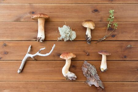nature and environment concept - boletus edulis mushroom, moss, branch and pine tree bark on wooden background