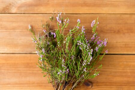 nature, botany and plants concept - heather bush on wooden table Фото со стока