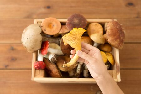 nature, environment and harvest concept - hand holding chanterelle over wooden box of different edible mushrooms