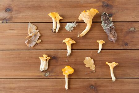 nature, environment and edible mushrooms concept - chanterelles on wooden background
