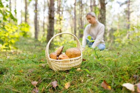 season, nature and leisure concept - wicker basket with brown cap boletus and young woman picking mushrooms in autumn forest
